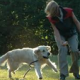 子犬の服従訓練