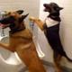 犬の訓練情報